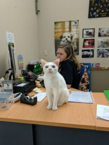 A Shelter Has Been Trying To Find A Home For This Cat For Over A Year