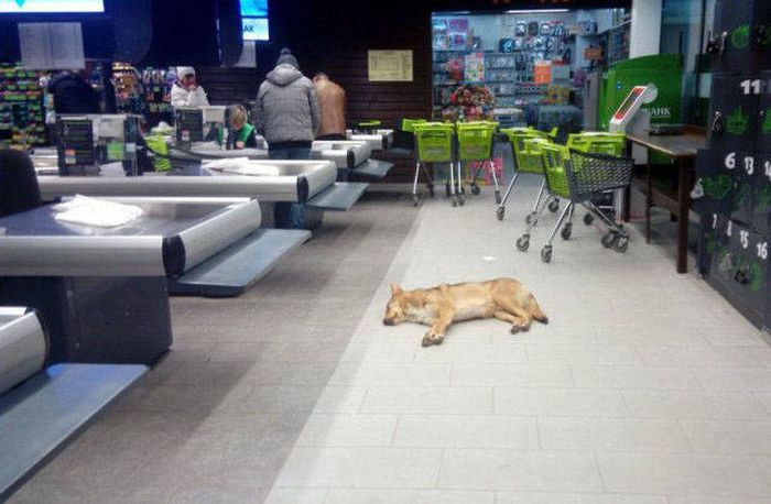 Proof That You Never Know What You Might Find When You Go Shopping