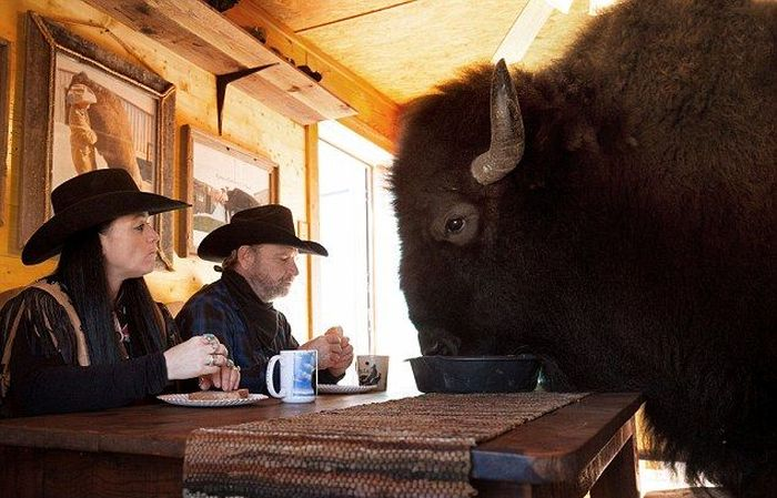 This Texas Couple Has A Bison In Their House