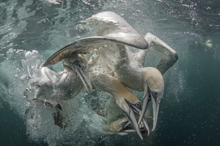 Stunning Underwater Photographs That Will Take Your Breath Away