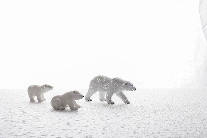 Photographer Creates Incredible Wildlife Images From Their Own Room