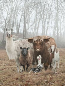 Animals Who Look Like They Belong On Album Covers