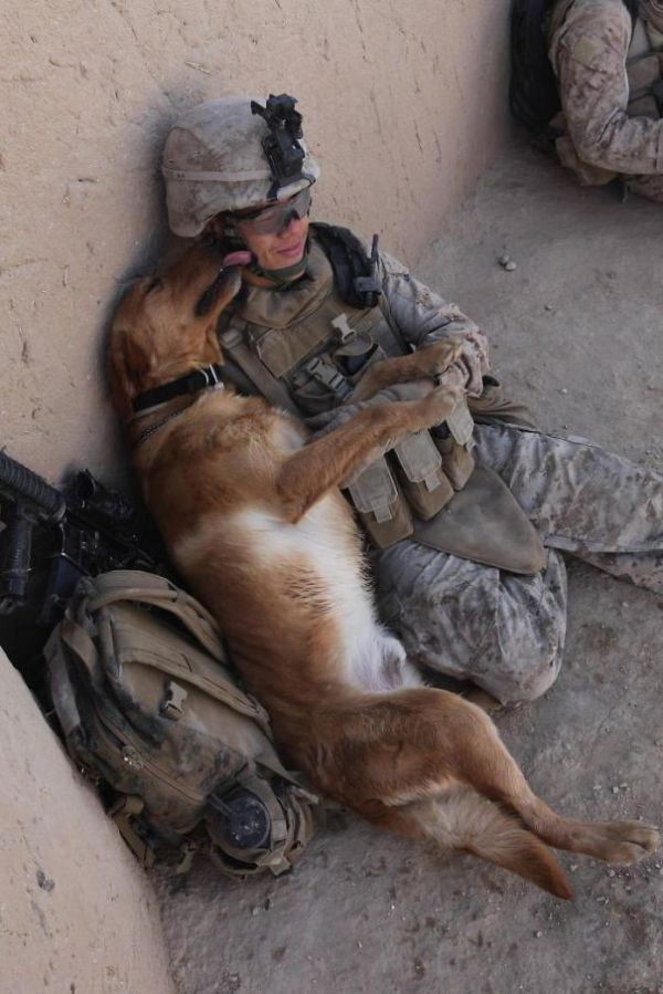Powerful Photos Show The World's Most Loyal Service Dogs