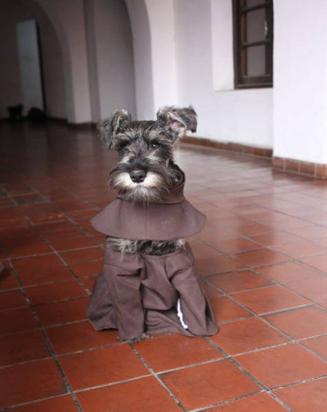 Homeless Dog Is Now A Monk In A Monastery