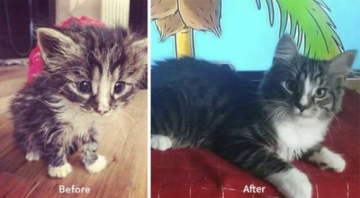 Cat-Saving Movement Started By A Woman With A Big Heart