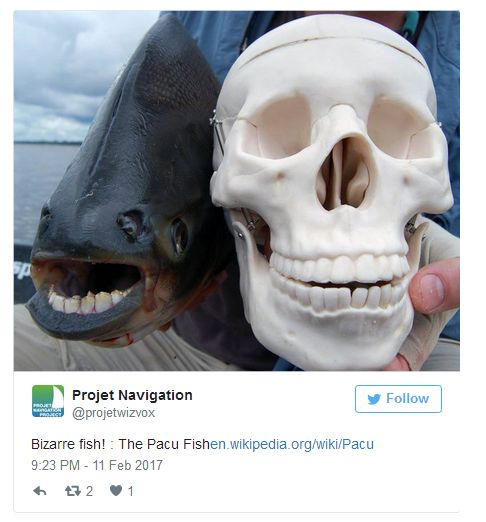 Pictures Of Animal Mouths That Are Absolutely Terrifying