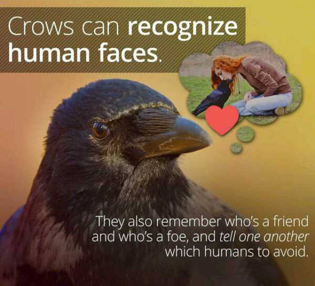 These Aren't Ordinary Facts These Are Awesome Facts