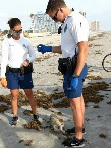 Daytona Resident Finds Drug Stash On The Bech