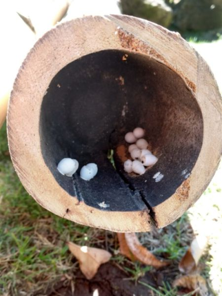What Is Inside These Eggs?