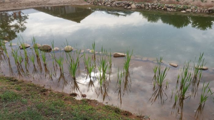 Man Creates His Very Own DIY Pond
