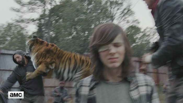 You'll Never Look At The Tiger From The Walking Dead The Same Way