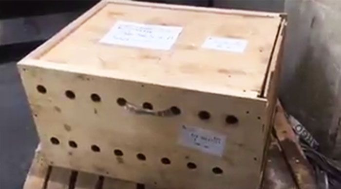 Mysterious Box At The Airport Finally Opened After 7 Days