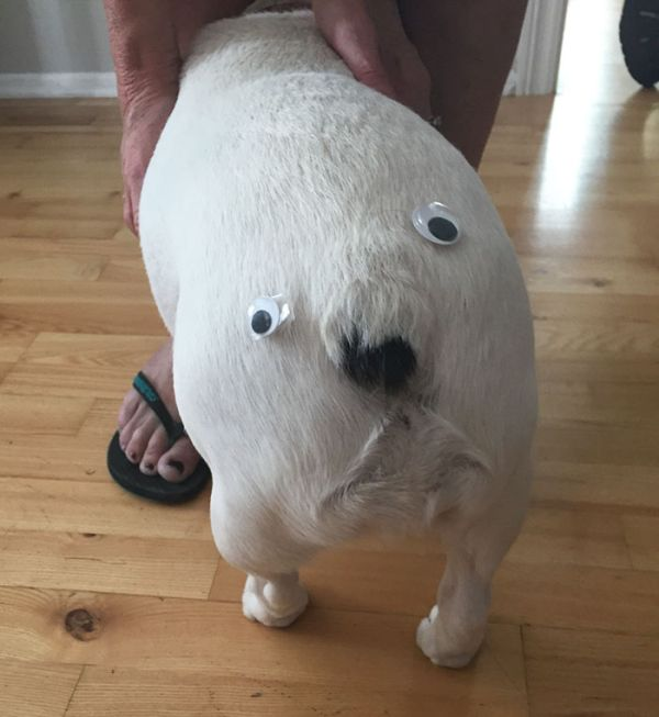 Pics That Prove Googly Eyes Make Everything Funnier