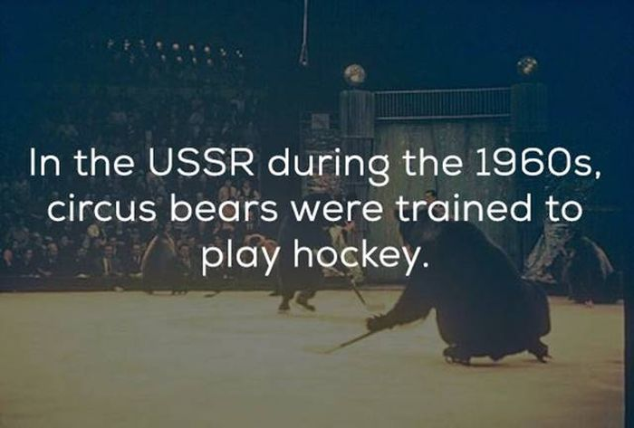 Hockey Facts That You Need In Your Life Right Now