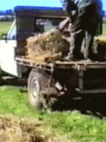 Reversed GIFs Are Unbelievably Entertaining