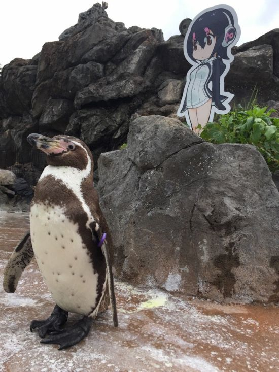 Penguin Falls In Love With An Anime Cutout After Getting Dumped