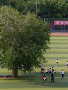 Kids In China Have To Play Football With A Tree On The Field