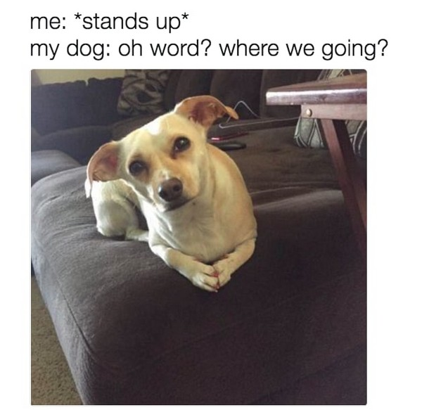 Hilarious And Wonderful Animal Memes That Will Crack You Up