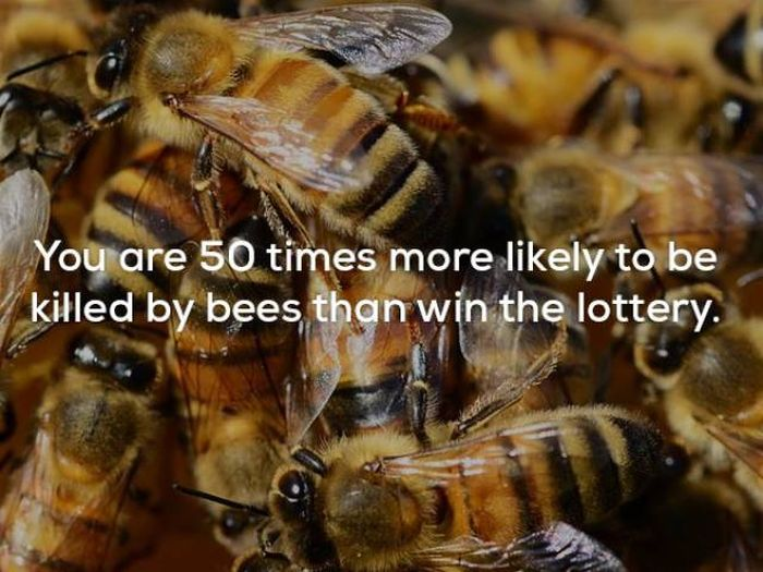 Wicked Facts That Will Make You Think