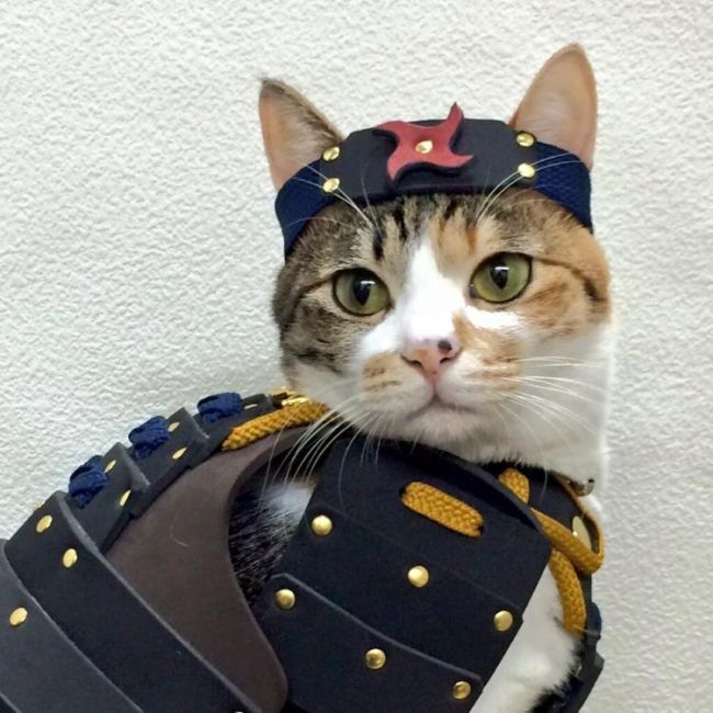 A Company Has Created Samurai Armor For Pets