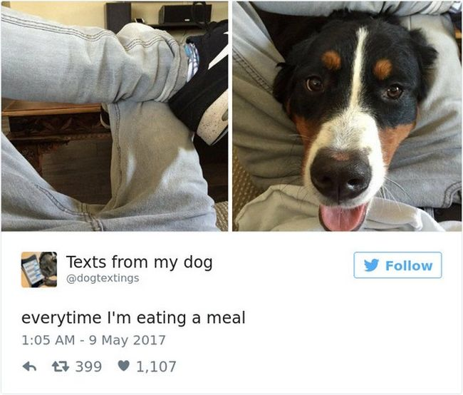 Hilarious Tweets About Dogs