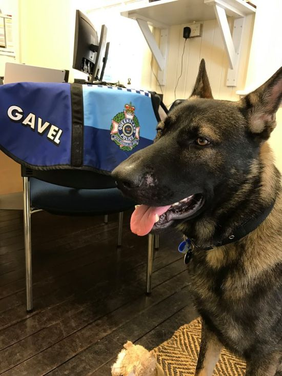 Police Dog Flunky Gets Vice Regal Dog Job