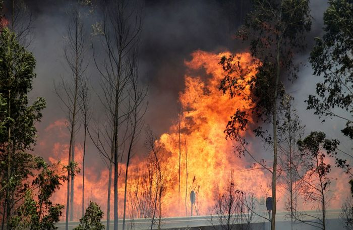 Forest Forest Fires In Portugal Claim Lives Of People Trapped In Cars