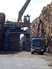Hurricane Creates World's Largest Fallen Timber Collection In Sweden