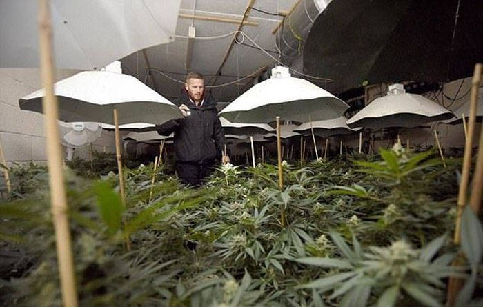 Multimillion Dollar Cannabis Factory Discovered In Nuclear Bunker