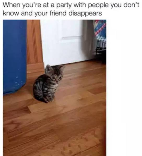 Hilarious Memes That All Introverts Will Appreciate