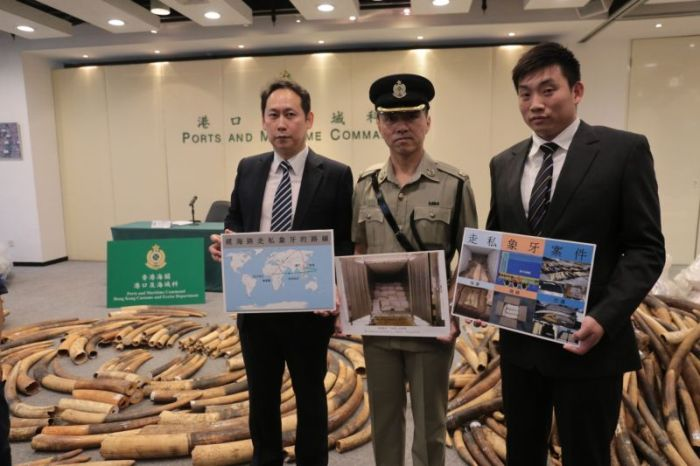 Chinese Customs Officers Confiscate 7 Tons Of Contraband Ivory