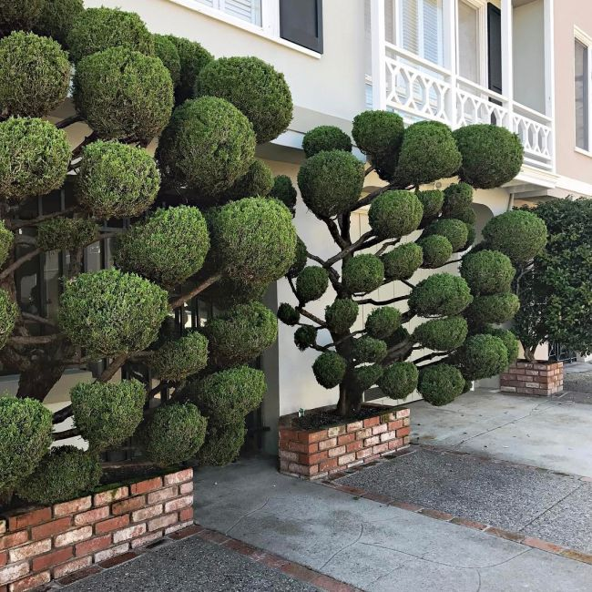 The Unique Trees Of San Francisco