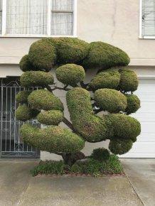 The Unique Trees Of San Francisco