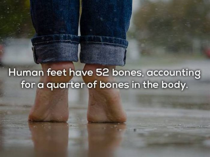 Fascinating Facts About The Human Body