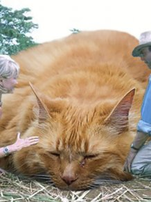 Someone Replaced All Of The Dinosaurs In Jurassic Park With Cats