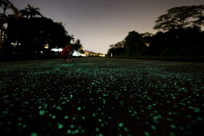 Luminous Path In Singapore Will Light Up Your Life