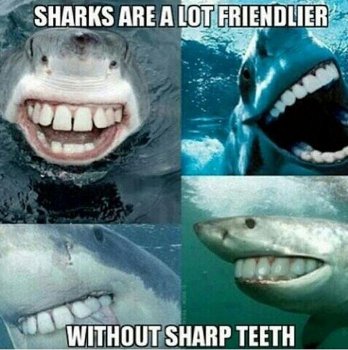 Hilarious Posts About Sharks That Are Sharktastic