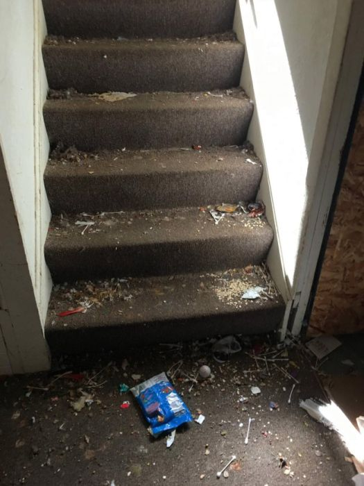 Family With Dogs Destroys Apartment
