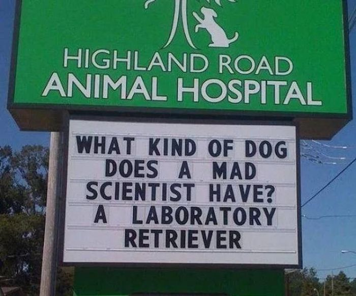 Hilarious Vet Clinic Signs That Will Crack You Up