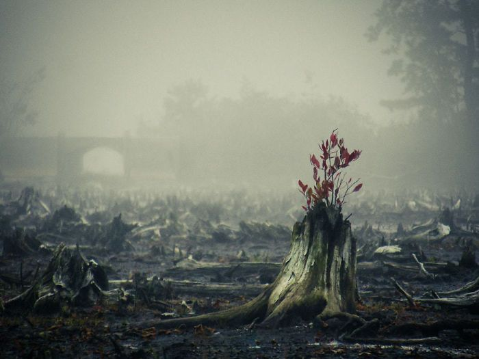 Amazing Trees That Refuse To Die
