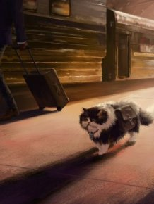 Traveling Cat Takes The Long Road Home