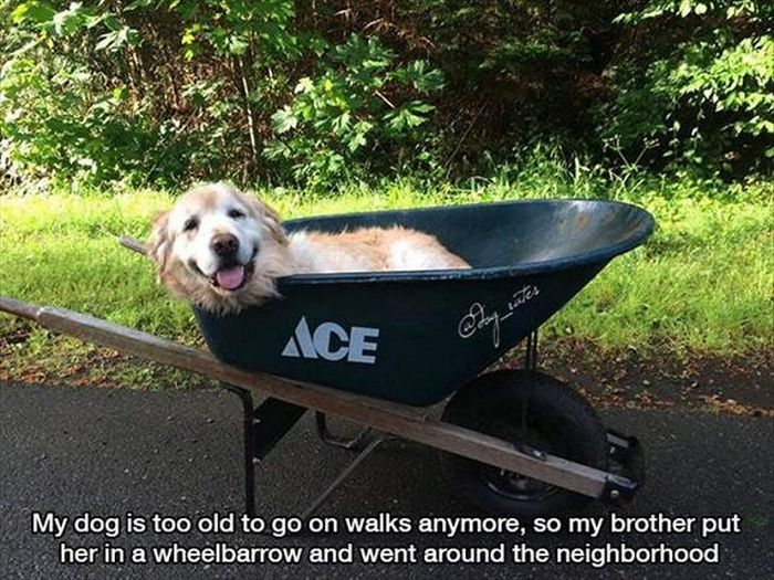 Pics That Will Tug At Your Heart Strings And Hit You In The Feels