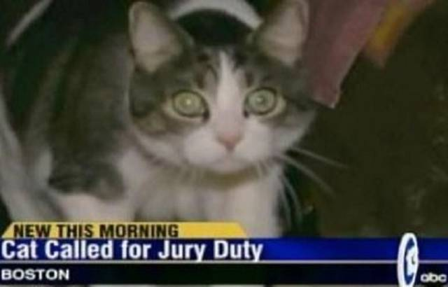 Funny News Headlines That Will Make You Giggle