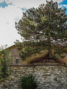 Church In Greece Has A 100 Year Old Tree On The Roof