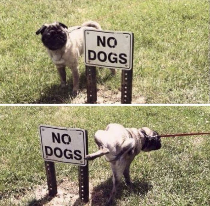 Animals Don't Care About The Rules As Well