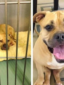 Animals Before And After The Adoption