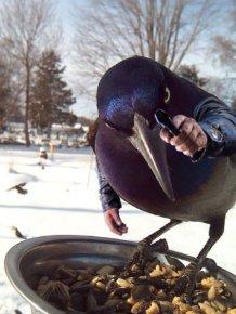 Human-Bird Hybrids