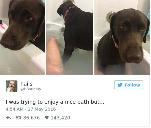 Dog Owners Share Laugh-Out-Loud Snaps Of Their Pets