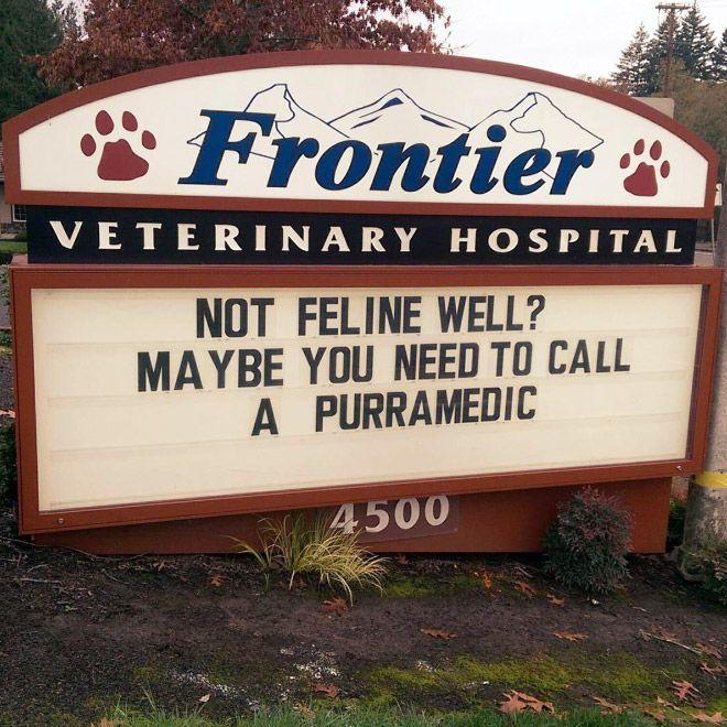 Brilliant Vet Signs