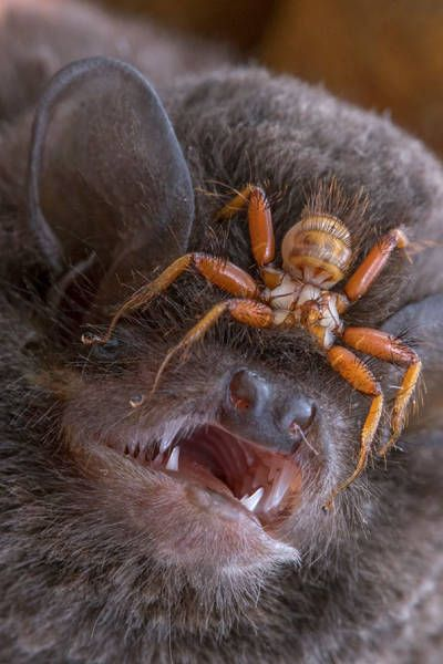 Nature Has A Lot Of Horrifying Stuff To Offer Us